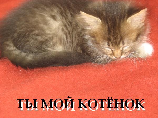 Открытки моему котенку 86