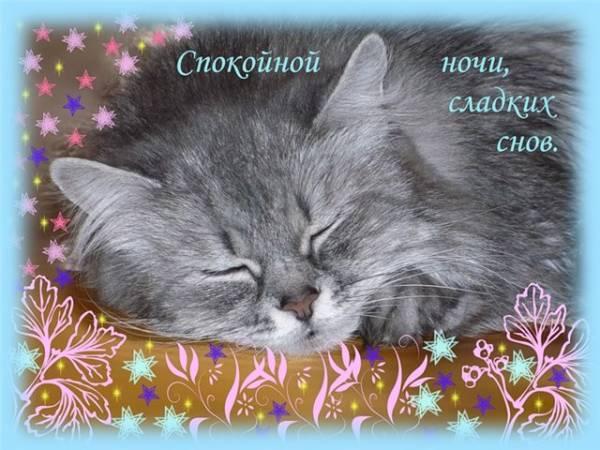 Открытка спокойной ночи котёнок 8